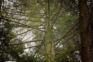 lipno park leśny