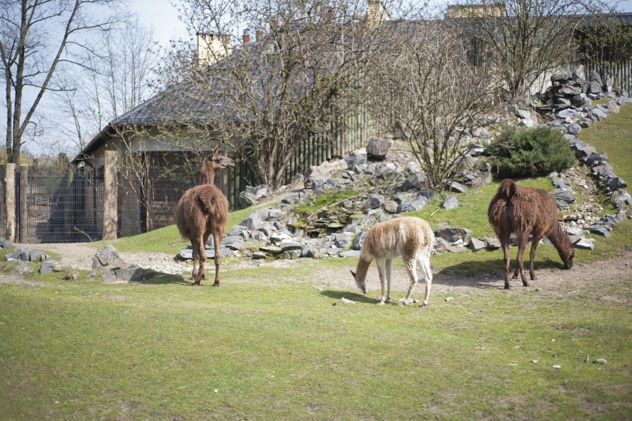 zoo atrakcje dla dzieci