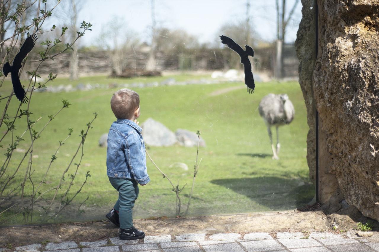 opolskie zoo atrakcje dla dzieci