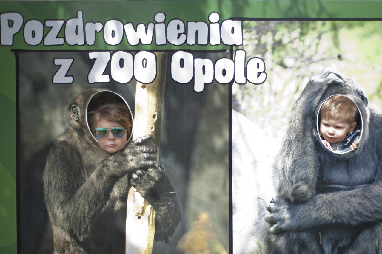 atrakcje dla dzieci zoo opole