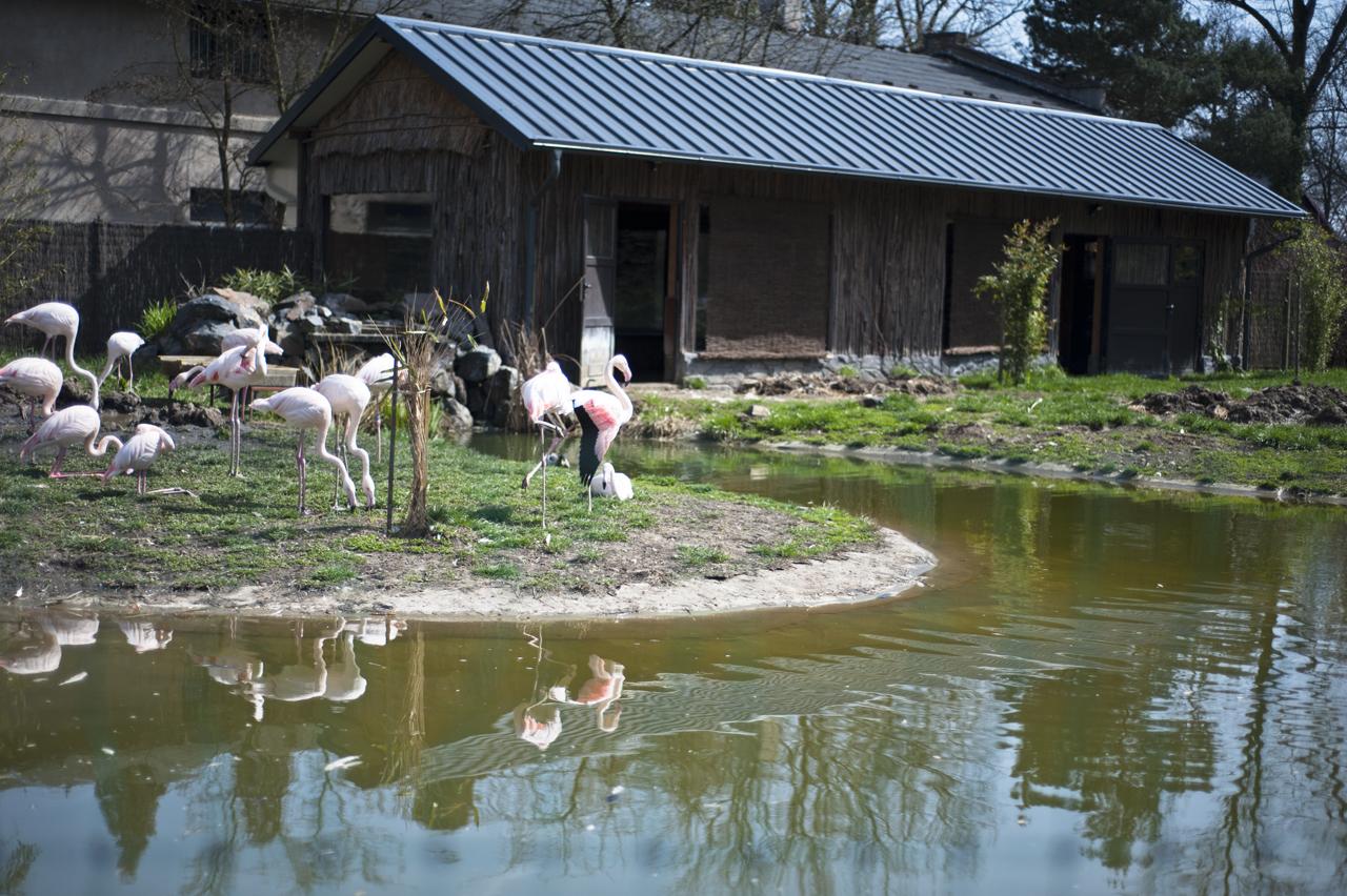 zoo opole nanude
